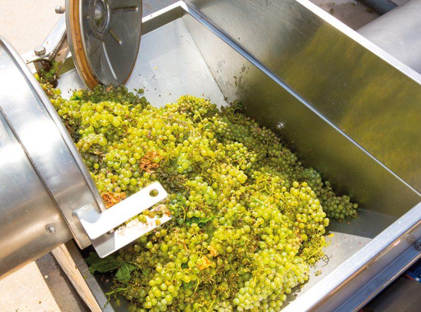 La CO2 liquida nella macerazione a freddo delle uve Müller Thurgau